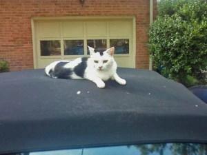 I like to sit on car hoods.