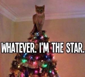 christmas tree cat meme