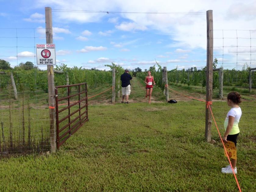 run the vineyards 1